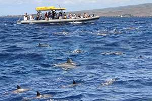 Dolphin Boat tour to Lanai